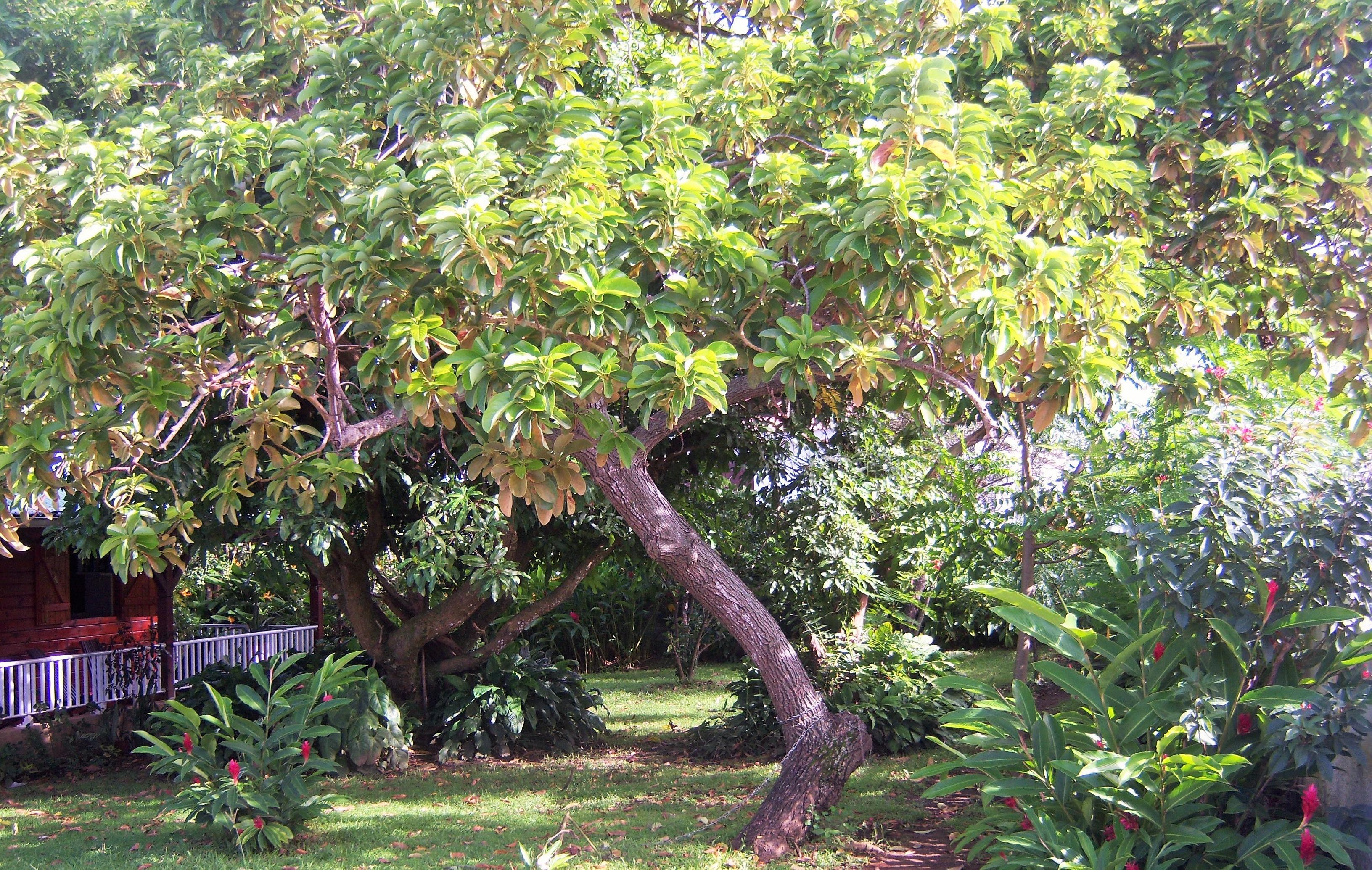 La cabane de germaine un joli bungalow r cent for Au jardin tropical guadeloupe